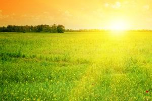 sun-field
